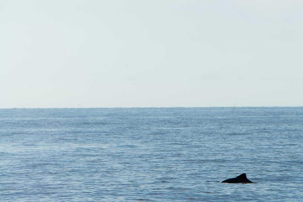 tumlare-fridykning